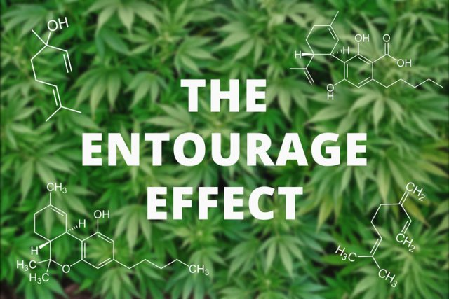 The Entourage Effect: What you need to know.